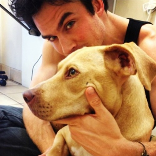 5 Celebrities Who've Adopted Rescue Dogs